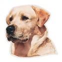 Pegatina de Labrador Retriever amarillo