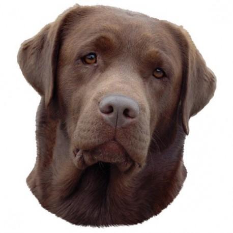 Pegatina de Labrador Retriever chocolate