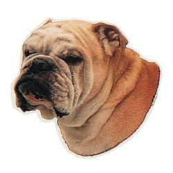 Pegatina de Bulldog Inglés