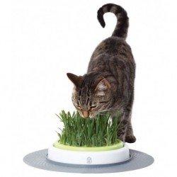 CatIt Senses Jardín de hierba gatera