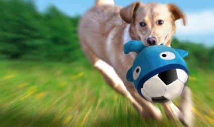 Perro jugando con un Booga Ball de Flamingo