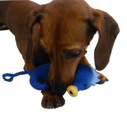 Perro jugando con el caballito de mar de latex