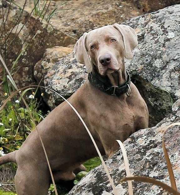 Taco, el perro de Leonor con nuestro Bali Verde