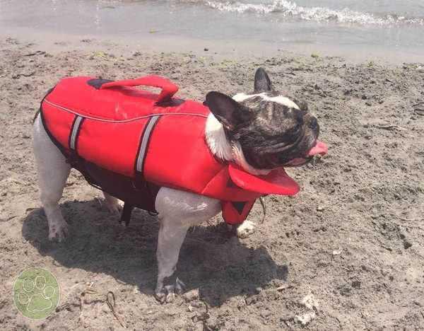 Bimba, con su chaleco salvavidas para perros de la talla S
