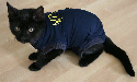 Gato con la camiseta protectora Medical Pet