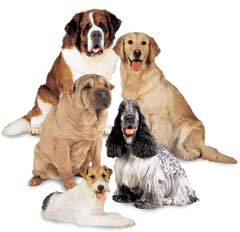 Muestra de perros para saber qué PetCargo elegir