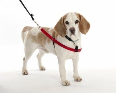 Arnés antitirones Walkezee colocado en un perro