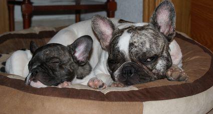 Bimba y Lula en la cama Bonzo marrón y beige