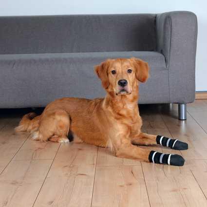 Los caletines antideslizantes para perros de Trixie