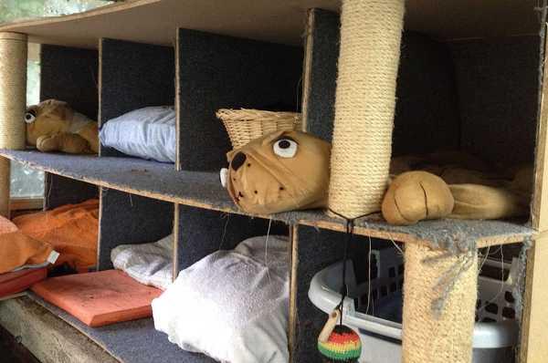 Estructura de madera y moqueta creada para la colonia de gatos de Mimopets