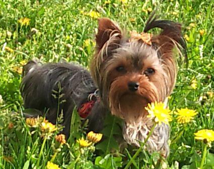 Gilda con el repelente de pulgas y garrapatas