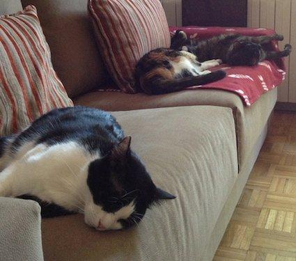 Mis gatos durmiendo en la manta Beany granate con raspas