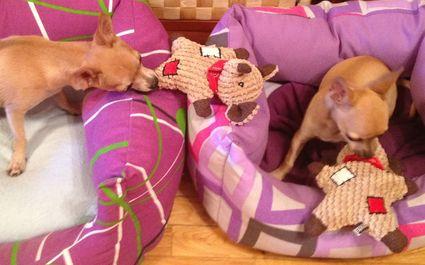 Perros jugando con el peluche para perros Ratón con parches