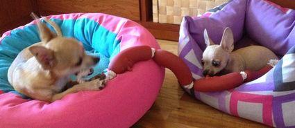 Cookie y Nemo jugando con su nueva ristra de salchichas