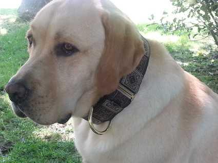 El perro de Paloma con nuestro Martingale Borneo marrón