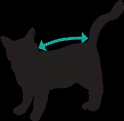Como medir al gato para elegir la talla de la camiseta MedicalPet