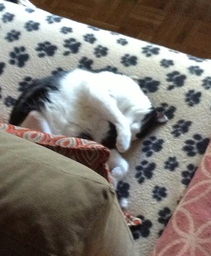 Minnie durmiendo en la manta Beany beige con huellas