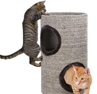 Gatos jugando en la Torre rascador Adrian