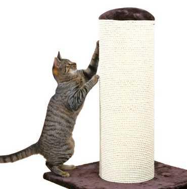 Gatos en el rascador Luca de Mimopets