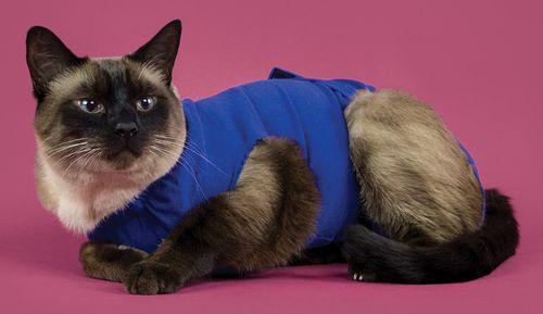 Camiseta Recovey Shirt también para gatos