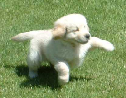Nuestro perro Pye de cachorro saltando
