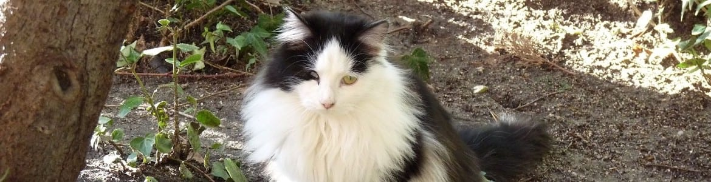 Careta, una de nuestras gatas de la colonia Mimopets
