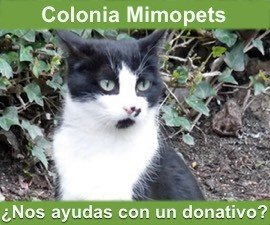 Colonia Mimopets columna izquierda